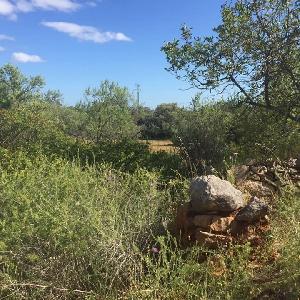 Large Ruin on Big Plot…